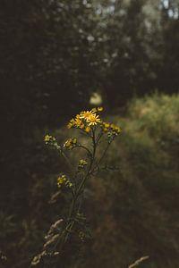 Gele bloemen van Rob Veldman