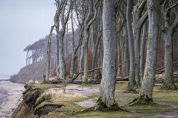Gespensterwald an der Küste von Jürgen Schmittdiel Photography