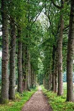 Bomenweg in Ede van Michel Groen