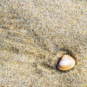 Schelp in het zand  van