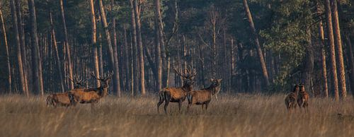 Samen op pad in de vroege ochtend