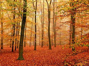 Herfst-Woud