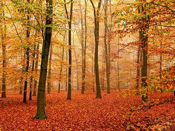 Herfst-Woud van Caroline Lichthart