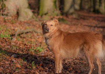 brauner Hund von Tania Perneel
