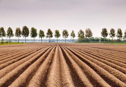 Aardapelveld van