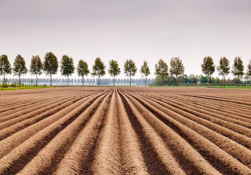Aardapelveld