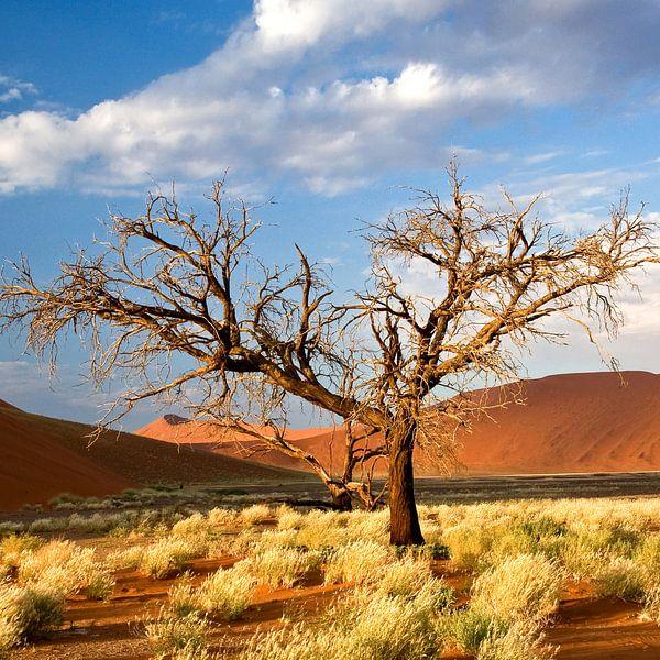 Boom bij rode zandduinen (Sosusvlei) in Namibië