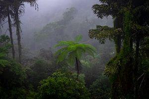 Ochtend in de jungle von