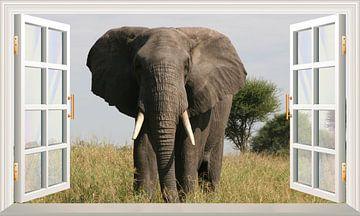 Een olifant kijkend in het open raam van Bert Hooijer
