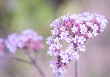 Kleine niedliche Blumen mit einer weichen lila Farbe. von Liv Jongman