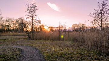 Sonnenuntergang in Park Cronesteyn von Richard Steenvoorden