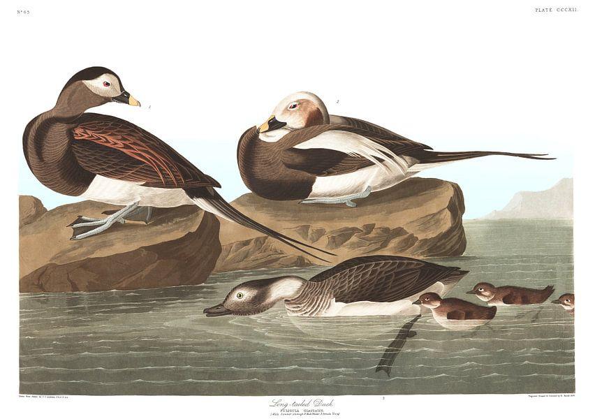 IJseend van Birds of America