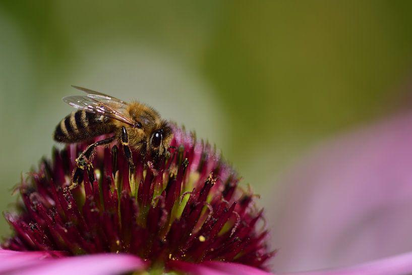 Een bij is op zoek naar stuifmeel op een bloem van Ulrike Leone