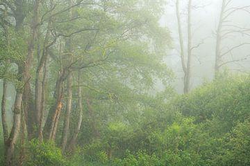 Nebliger Morgen mit frischen Frühlingsfarben im Tal der Beerze. von Jos Pannekoek