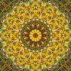 Dandelion Dream van Frans Blok thumbnail