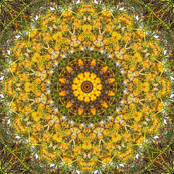 Dandelion Dream van Frans Blok