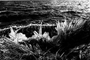 Ijspegels Lauwersmeer