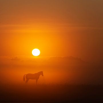 Paard in de mist van Guna Andersone