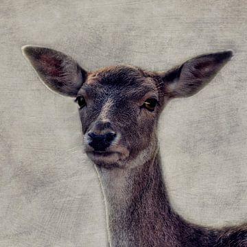 Bambi van Claudia Moeckel