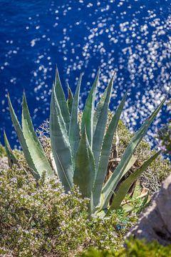Agave op de kliffen van Capri van Christian Müringer