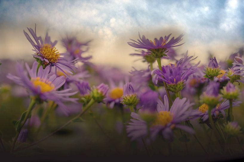 Blumenfeld von Ellinor Creation