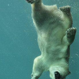Eisbär unter Wasser von Tilly Meijer