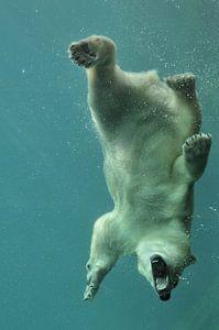 ours polaire sous l'eau