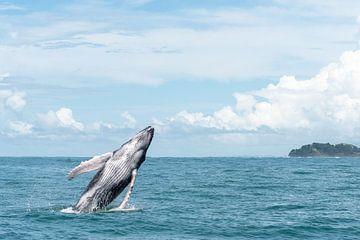 Springender Wal von Merijn Loch