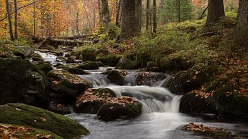 herfst in het bayerischer wald van bart vialle