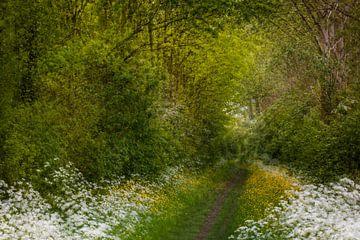 Frühlingswald in den Niederlanden | Impressionismus von Marjolijn Maljaars
