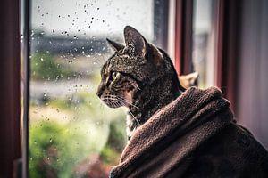 Kat Voor Het Raam van