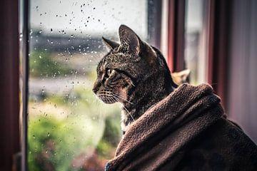 Kat Voor Het Raam van Felicity Berkleef