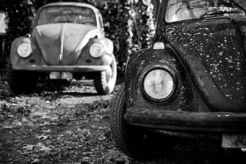 Beetle / Kever sur Geert D