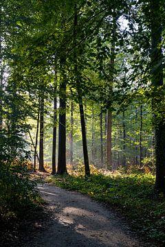 Ein heller Morgen im Wald von Noraly Sprenkels