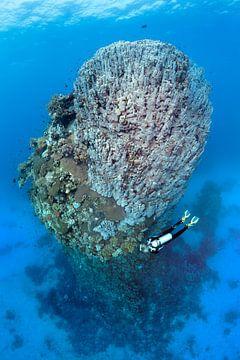 Diving in St. Johns, Egypt van Norbert Probst