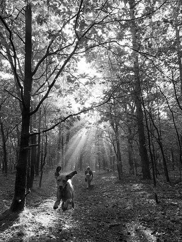 Honden rennend door het zonlicht in het bos
