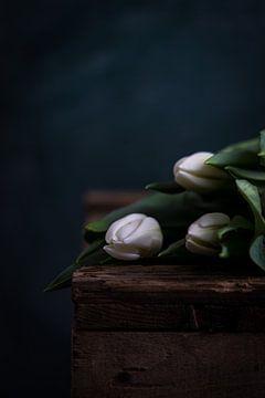 Weiße Tulpen in dunkler Umgebung von Maaike Zaal