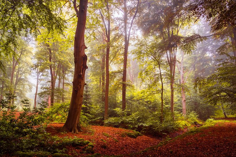 The Solitary Tree van Mark Vredeveld