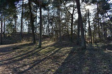 duin & bos  van Arjan v Berkel
