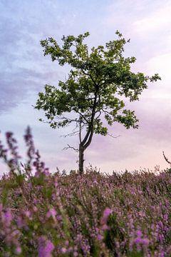 Die Limburger Heide 1 von visitlimburg