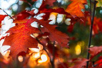 Nahaufnahme eines roten Herbstblattes mit bokeh im Hintergrund von Gea Gaetani d'Aragona