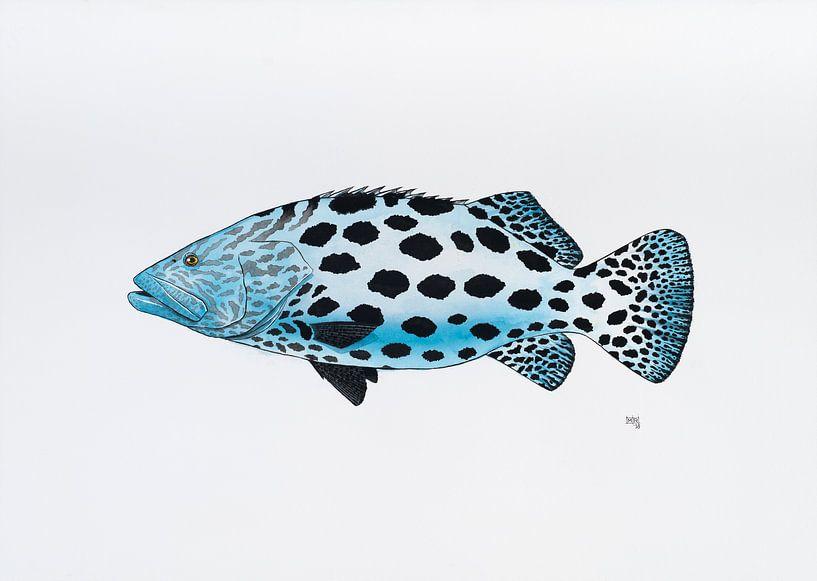 Fisch Serie B von Martino Romijn