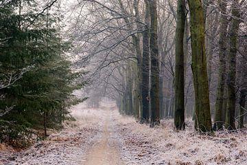 Bevroren bos op de Veluwe van Evert Jan Kip