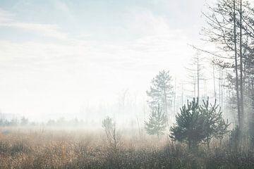Wintermorgennebel von Dorien van Witteveen