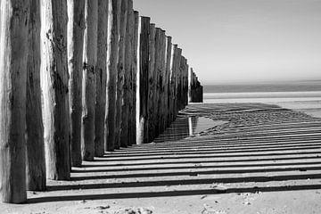 Palen op het strand von Nicole Boekestijn