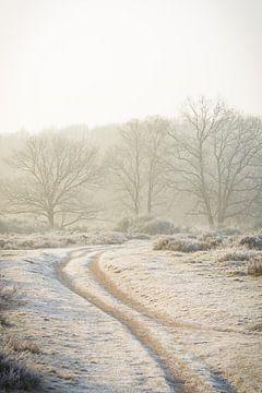 Die warmen Farben der Sonne an einem kalten Morgen von Michel Geluk