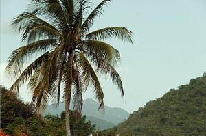Palmboom Vintage Green