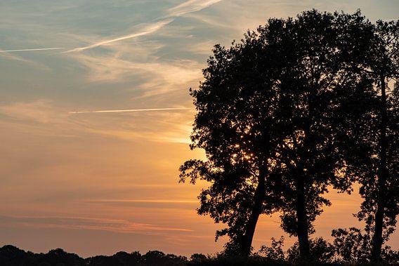 bomen silhouet en zonsondergang.