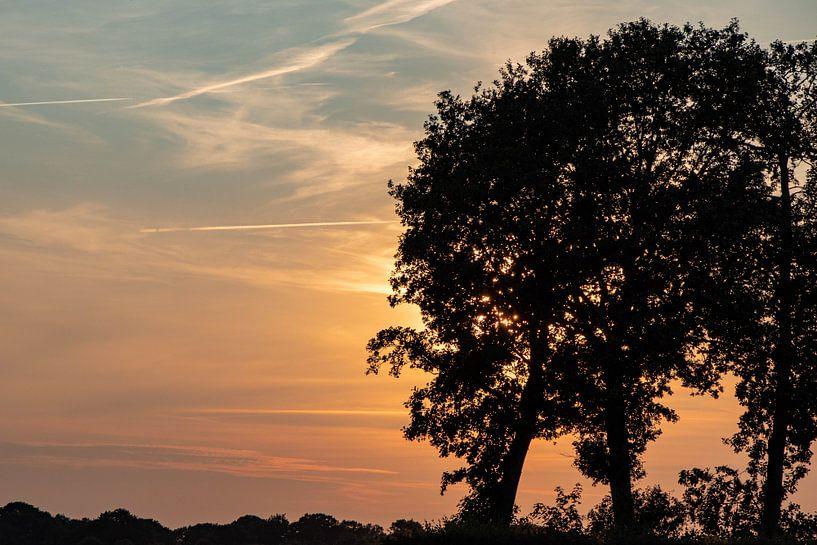 bomen silhouet en zonsondergang. van Anjo ten Kate