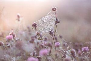 Spinnennetz im Klee von Tania Perneel